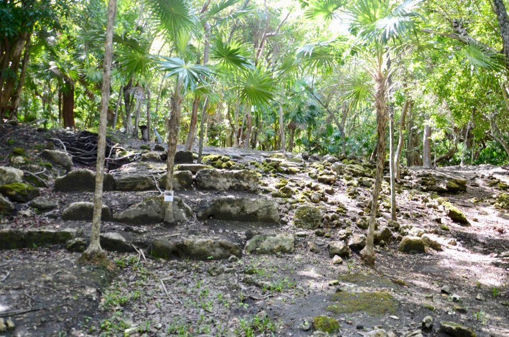 Mostly hidden Mayan ruins.