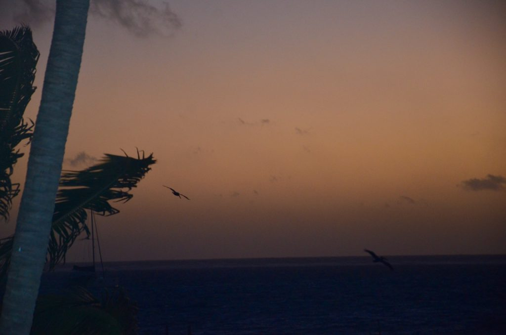 Early dawn with a bird over the ocean.