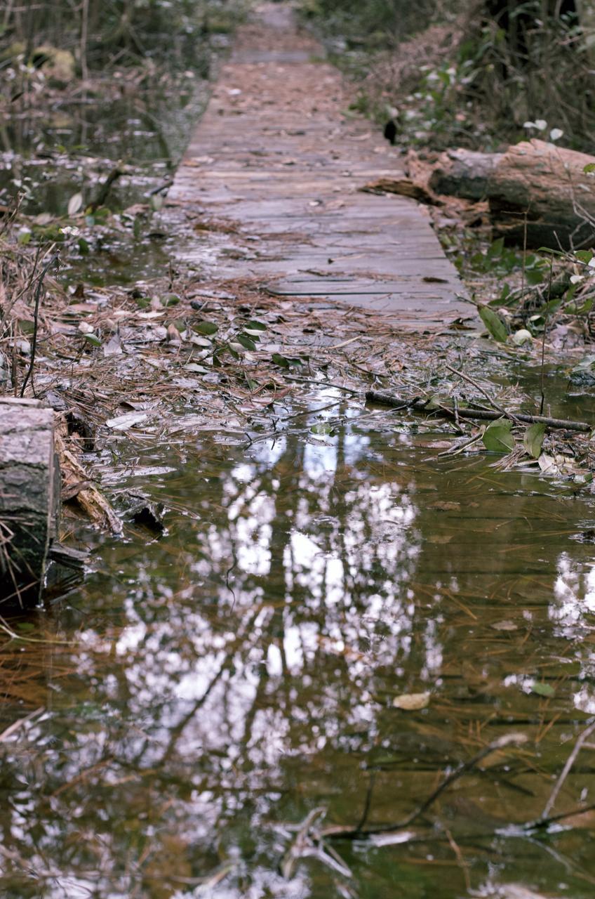 Aiken State Park Photography