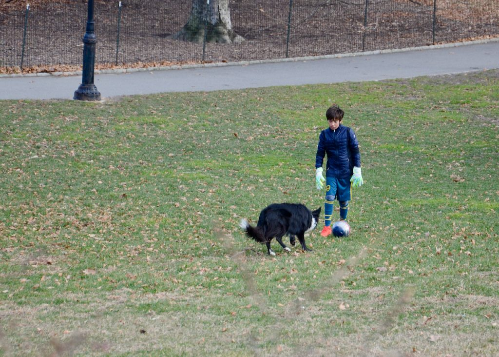 A kid playing soccer with a Collie, both were playing goalie.